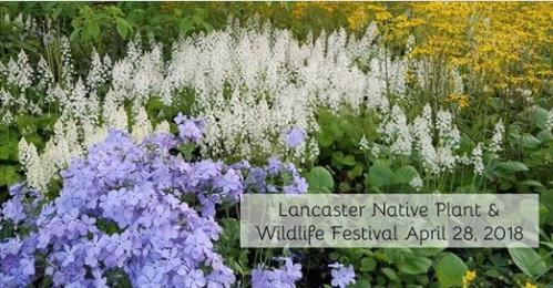 Free Thyme at Lancaster Native Plant Festival