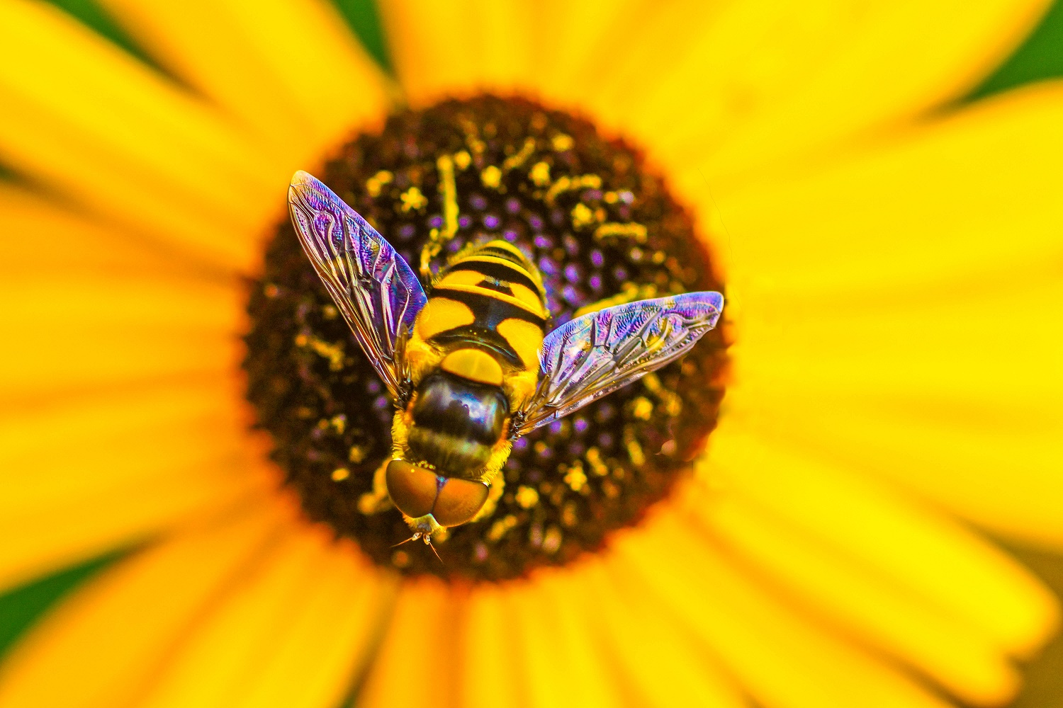 Protecting our Pollinators to be Discussed at Farm Show