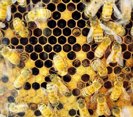 Honey Extraction Demonstration