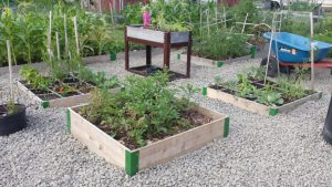 Raised Garden Bed. Photo by Julie Kingston