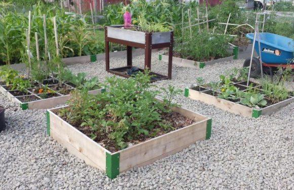 Raised Garden Beds for Veggies