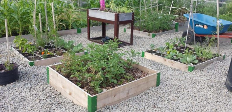 Raised Garden Beds for Veggies